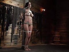 bdsm, big tits, babe, vibrator, brunette, tattooed, hairy pussy, pussy fingering, rope bondage, twig, hogtied, kink, gia dimarco
