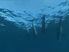Undersea pleasures... by devilsreaper