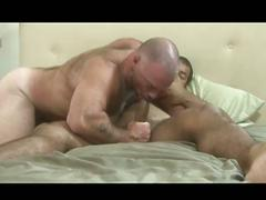 Big, sexy bears give each other blowjobs