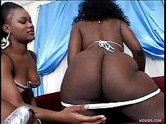 Chocolate asses babes