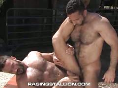 amateurs, anal, bareback, bears, big cocks, blowjobs, cumshots, extreme, hardcore, hunks, public sex, assfucking, boy next door, cub, deepthroat, fucking, gagging, hairy, hairy men, muscle