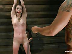 bondage, bdsm, whipping, blowjob, tied up, training, brunette milf, vault, ball gag, clothespins, chain collar, derrick pierce, katharine cane, the training of o, kinky dollars