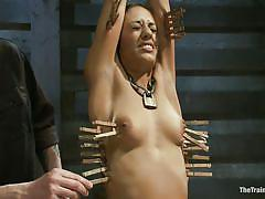 small tits, bdsm, latina, vibrator, screaming, tit torture, brunette milf, vault, executor, clothespins, lyla storm, the training of o, kinky dollars