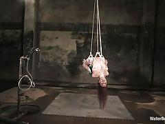 milf, bdsm, hanging, redhead, natural tits, pierced nipples, ropes, cold water, water bondage, soaking wet, sabrina fox, water bondage, kinky dollars
