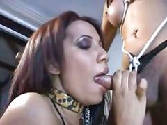 Transsexual bondage