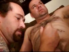Hairy fat daddies in hot cock sucking