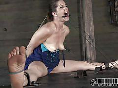 small tits, milf, bdsm, brunette, clamps, bastonnade, stick with dildo, real time, tongue torture, cici rhodes, real time bondage, kinkster cash