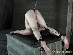 milf, bdsm, brunette, pale, moaning, chained, upside down, mouth opened, restraints, tennis ball, infernal restraints, poppy james, poppy james, infernal restraints, kinkster cash