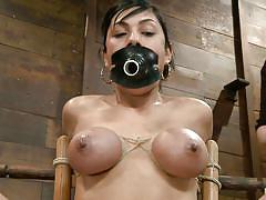 bdsm, big tits, babe, tit torture, black hair, whipped cream, shaved pussy, mouth gag, tied on chair, nipple pumps, hogtied, kink, beretta james, beretta james, hogtied, kinky dollars