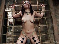 bdsm, babe, blowjob, brunette, dungeon, tied up, electrodes, the training of o, kink, gabriella paltrova, owen gray