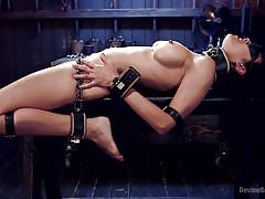 bdsm, torture, whipping, glasses, busty, collar, brunette babe, chains, device bondage, device bondage, kink, orlando, beretta james