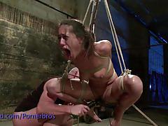brunette, babe, bdsm, bondage, big ass, slave, beauty, torture, round ass, glamour