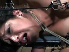 courtney taylor, vicki chase, brunette, big dick, hardcore, big tits, blonde, milf, busty, babe, pussy, bdsm, bondage, big ass, reverse cowgirl, doggy style, toys, dildo, tight pussy, forced