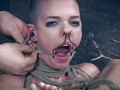 bdsm, shaved head, blonde babe, tattooed babe, nipple clamps, rope bondage, real time bondage, hooks, real time bondage, abigail dupree