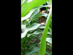 asian, amateur, public, pov, verified amateurs, point-of-view, outside, hot-farmers-daughter, doggystyle, step-daughter, wet-pussy, cumshot, pov-blowjob, hard-fast-fuck