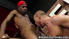Stud gobbles black cocks