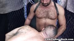 Bareback muscle bears stretching cub ass