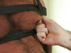 Hairi shibari bear nipples tortured and caned
