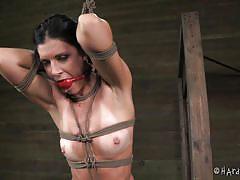 milf, tied up, black hair, ropes, scissors, ball gag, shibari, hard tied, cyd black, india summer