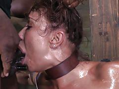 milf, bondage, bdsm, asian, big boobs, oiled, brunette, tied up, mouth fuck, executor, leather belts, restraints, sexually broken, ava devine, matt williams
