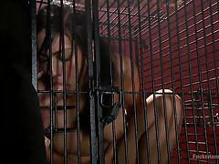 Bitch locked in a cage to offer sexual favors