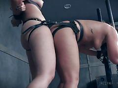 threesome, strapon, lesbians, torture, ass licking, bound, pussy licking, from behind, ffm, device bondage, infernal restraints, maddy oreilly, samantha rone