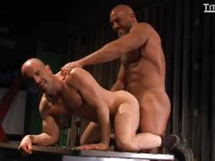 Hairy muscular daddies adam russo and jesse fucks.